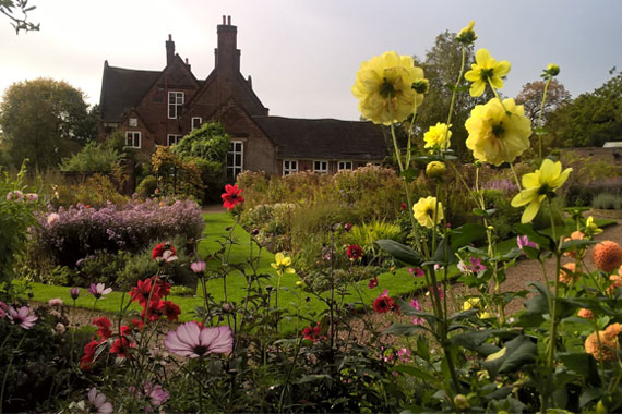Yellow dahlias with Winterbourne house overlooking in the background