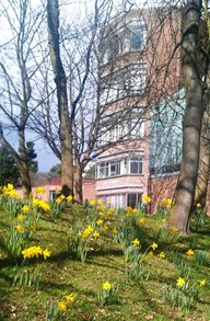 School of Education with daffodils